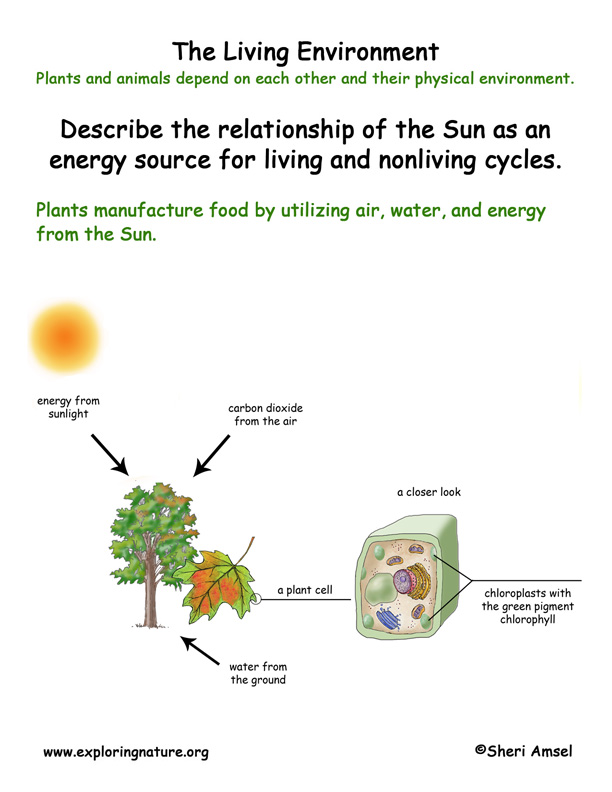 <b>Living Environment: Photosynthesis</b>