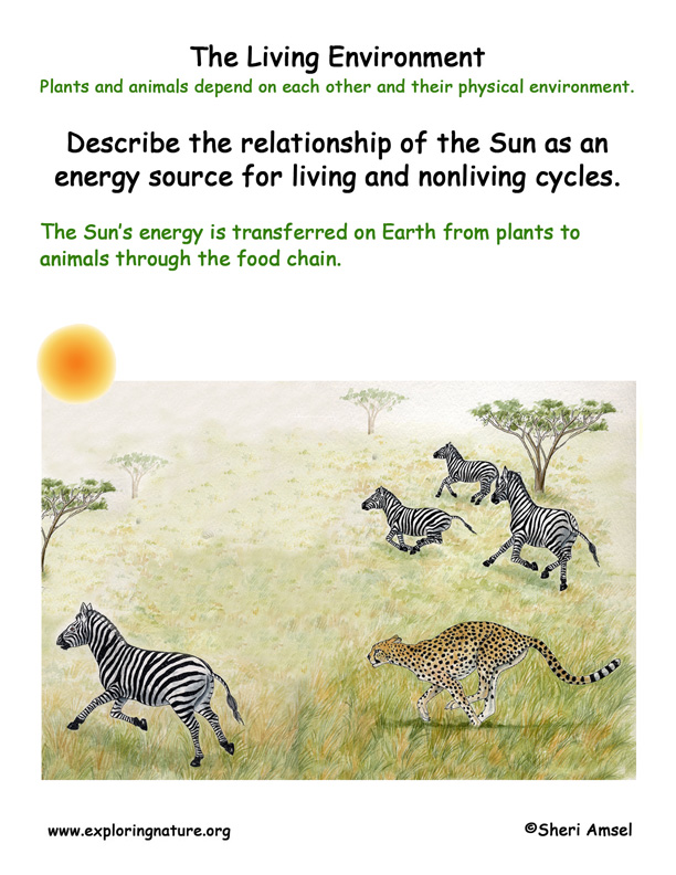 <b>Living Environment: Sun and the Food Chain</b>