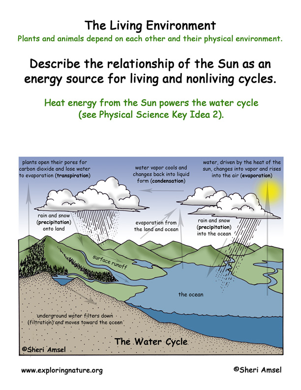 <b>Living Environment: Sun and the Water Cycle</b>