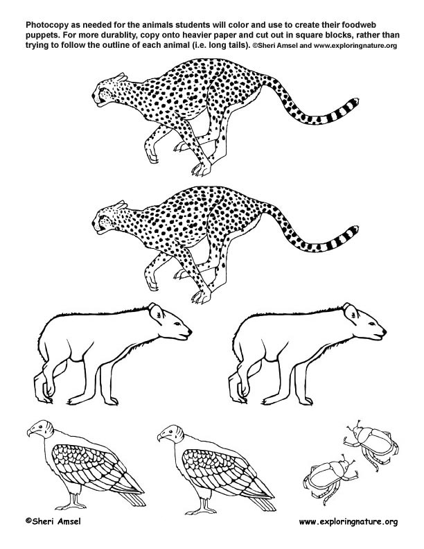 African+grassland+coloring+page on Grassland Animals Coloring Pages