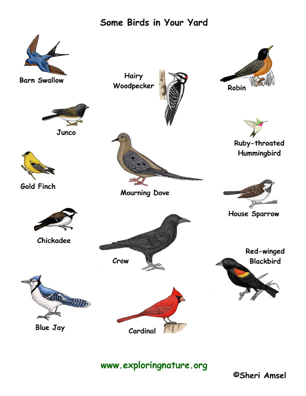 Bird Research - Your First Different Kinds Of Birds