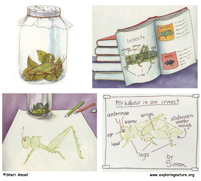 Bug Hunt, Identification and Drawing