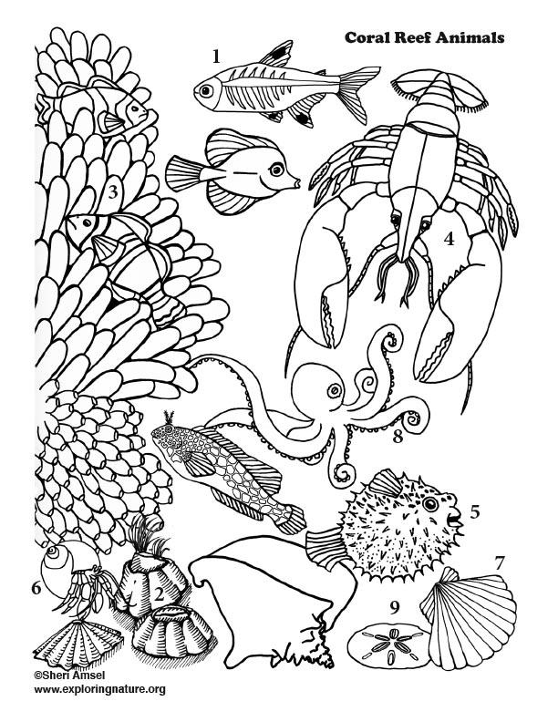Ocean Animals - Word Scramble
