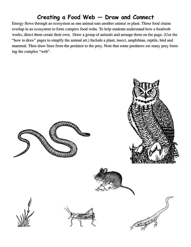 Drawing food webs with own animal art for Easy drawing websites