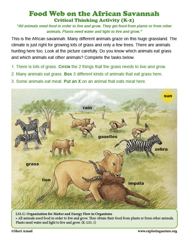 Food Web on the African Savannah - Critical Thinking (K-2)