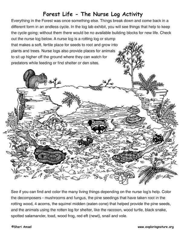 Forest Life Activity - The Nurse Log