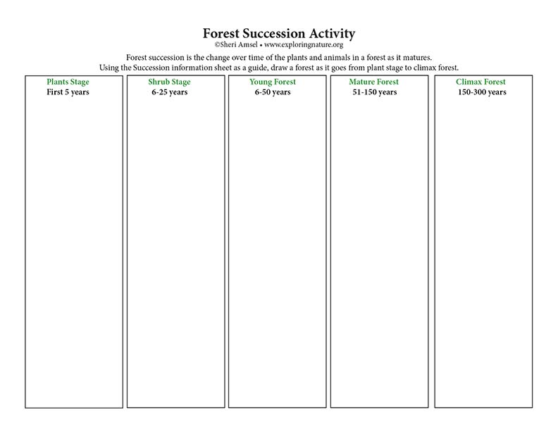 Forest Succession Activity - Critical Thinking