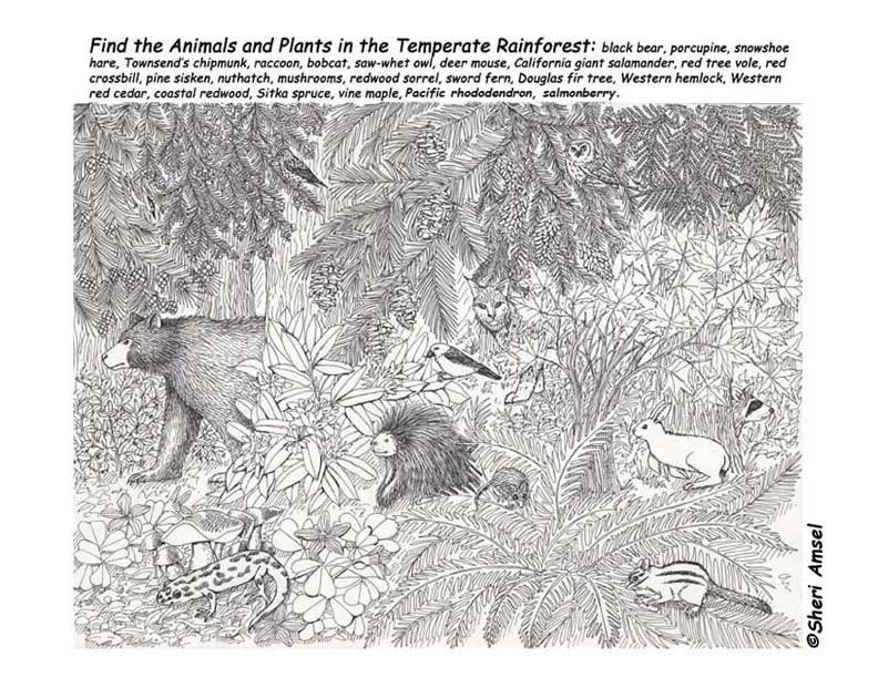 Temperate Rainforest Hidden Picture