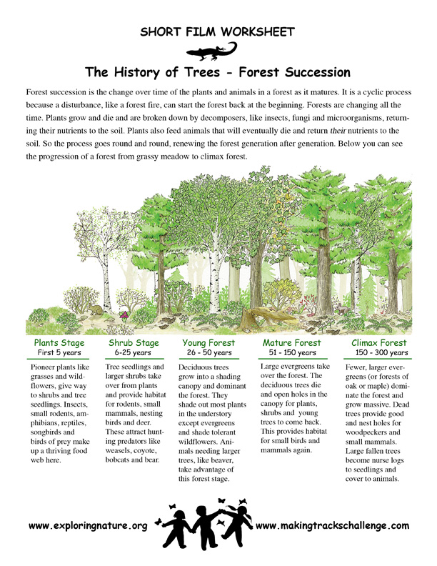 Succession in the Forest