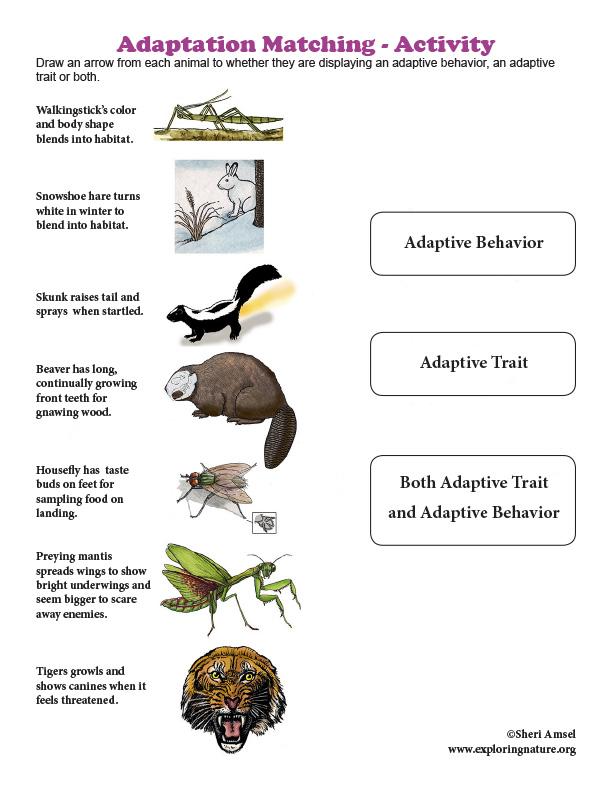 Adaptation Matching - Activity
