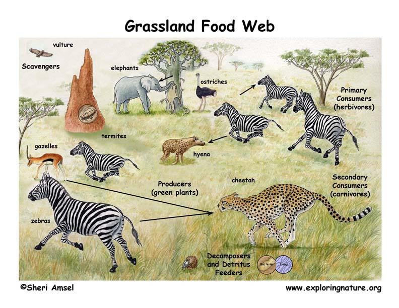 African Grassland Habitat Food Web Puppet Show (Pre-K- Grade 2)