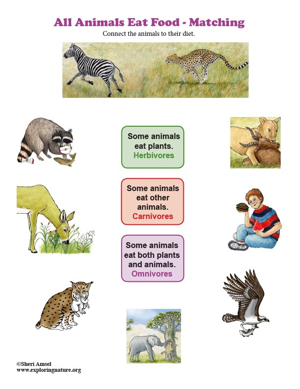 All Animals Eat Food - Matching (Kindergarten NGSS)