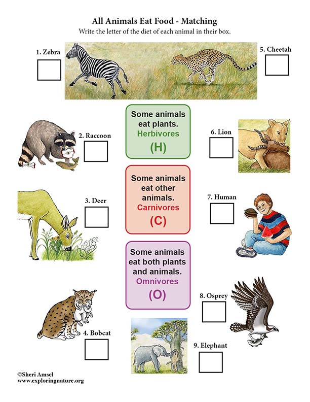 All Animals Need Food  - Matching (5th Grade NGSS)