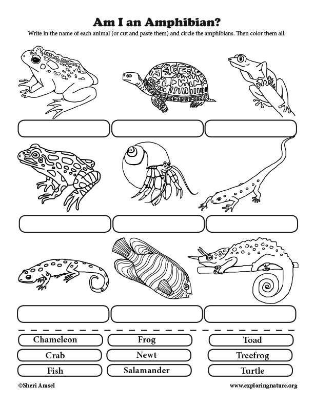 Am I an Amphibian? Classification for Elementary