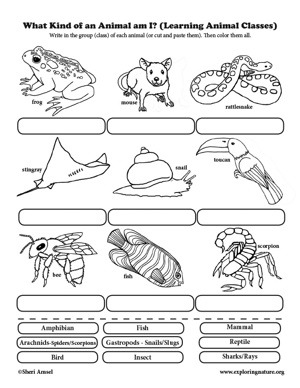 What Kind of an Animal am I? Classification for Elementary
