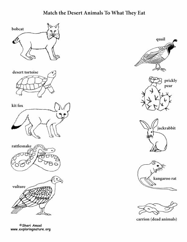 What Do I Eat? Match the Desert Animal to Its Food