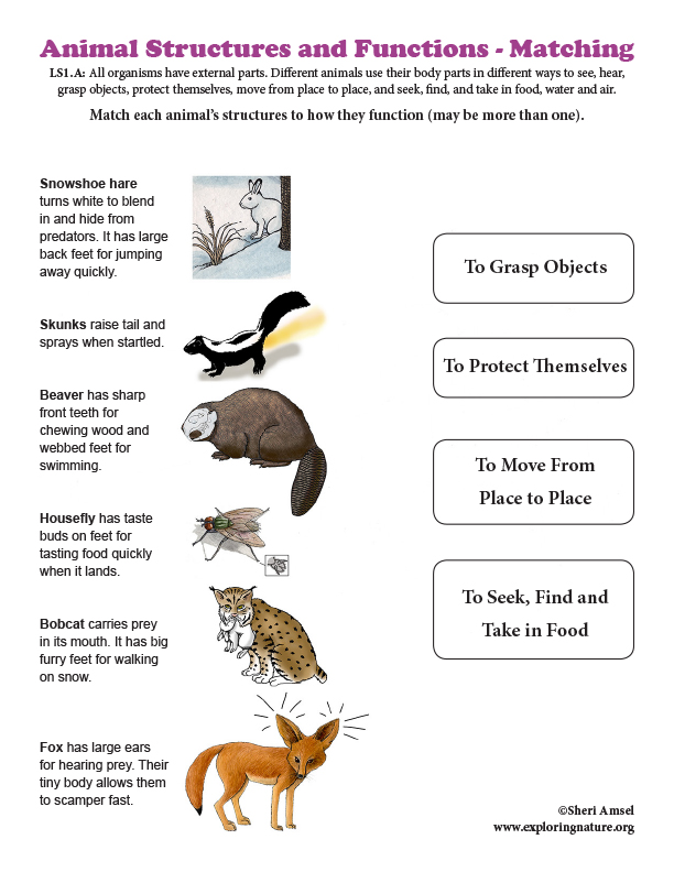 Animal Structures and Functions - Matching