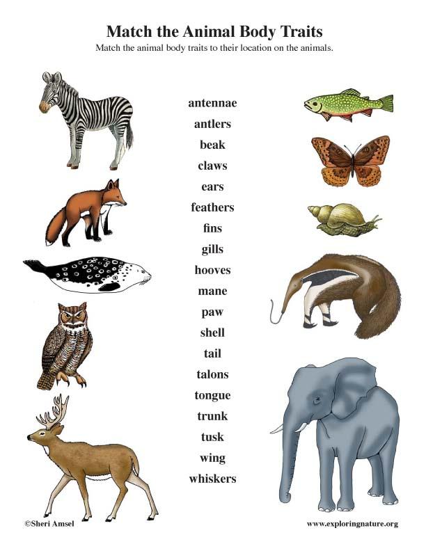 Animal Traits - Matching (Arrows)