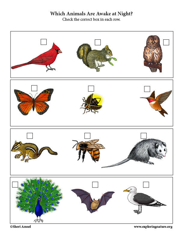 Which Animals are Awake at Night? Critical Thinking Activity