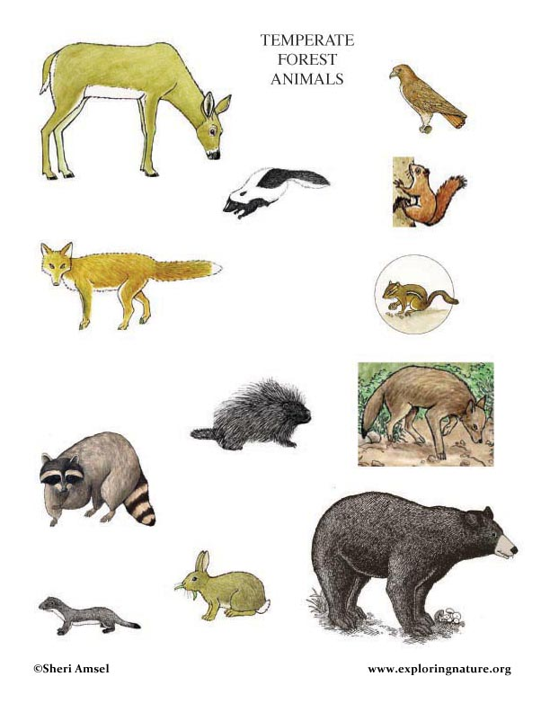 ... Photos - Animal Habitats Worksheet Forest Animals First Grade Science