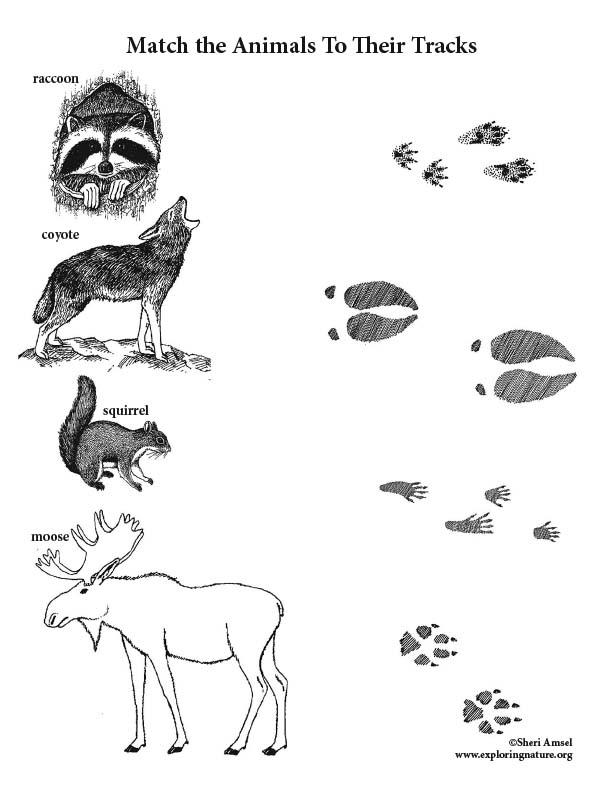 Animal Tracks Activity