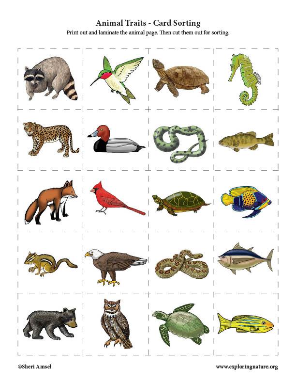 Animal Traits - Card Sorting Activity