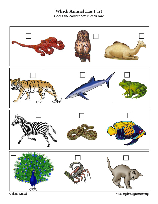 Which Animal Has Fur? Critical Thinking Activity (PreK-1)
