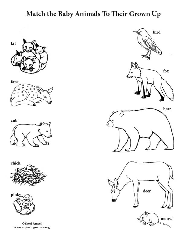 Match the Baby Animals to Their Grown Up (Black and White)