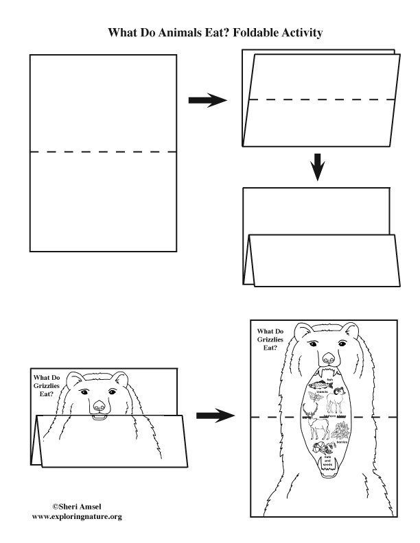What Do Grizzly Bears Eat? Foldable Activity