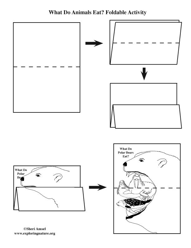 What Do Polar Bears Eat? Foldable Activity