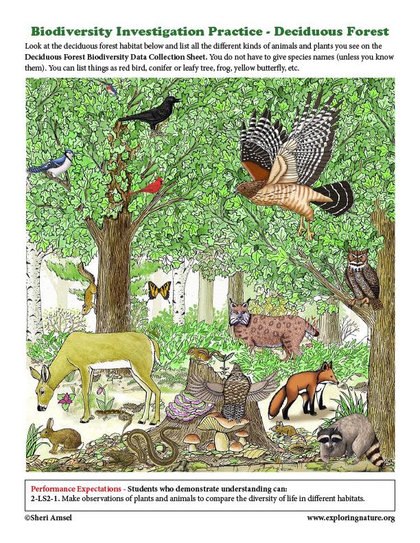 Biodiversity Investigation Practice - Deciduous Forest