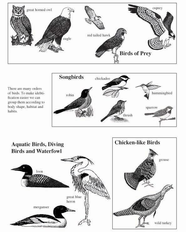 Bird Traits Lecture Activity And Quiz
