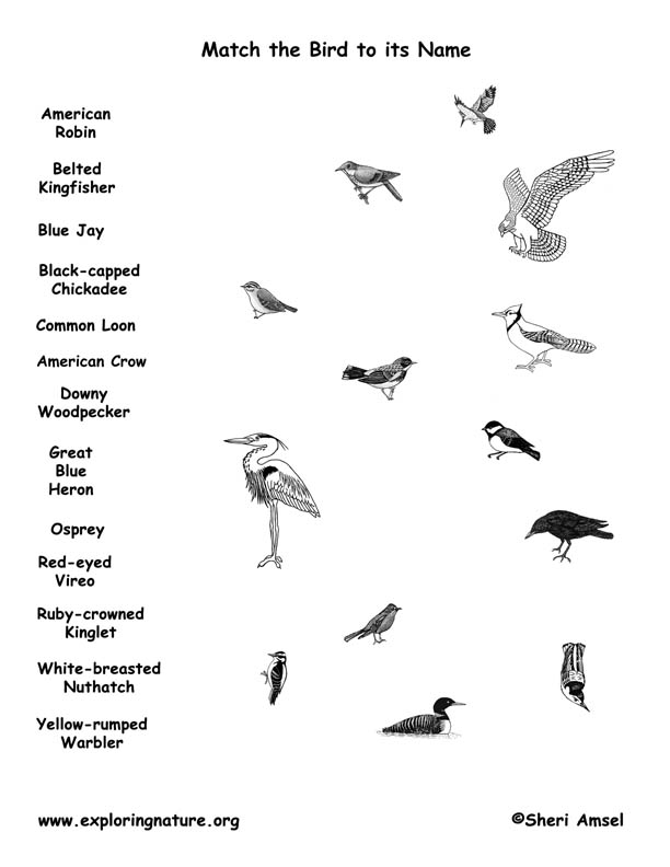 Match the Bird to its Name