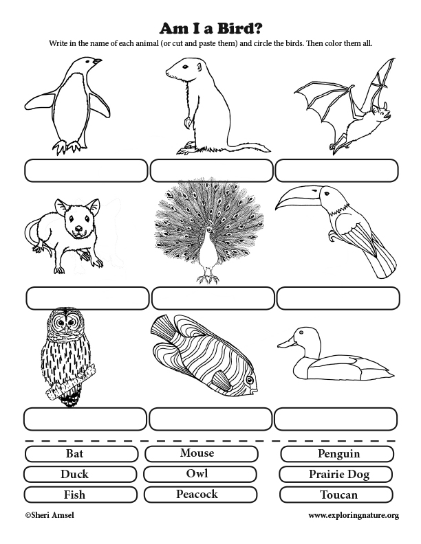 Am I a Bird? Classification for Elementary