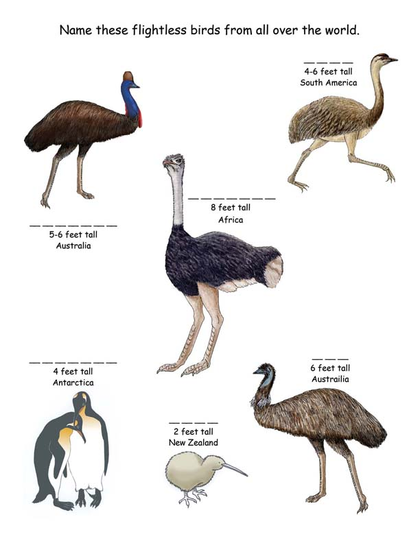 Name the flightless birds from around the world