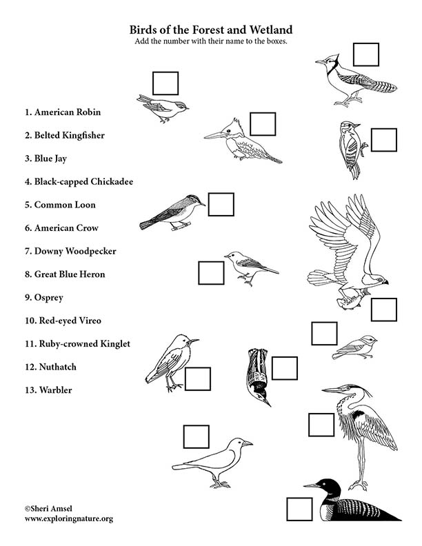 Birds of the Forest and Wetland Matching