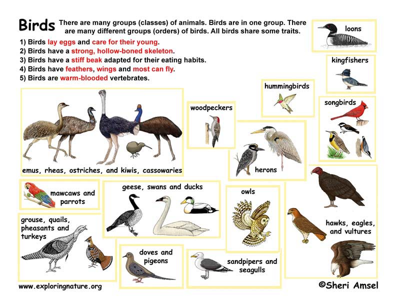 Bird Classification Lecture and Handouts