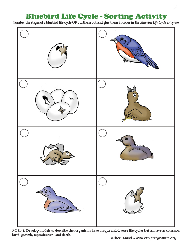 Bluebird Life Cycle - Sorting Activity