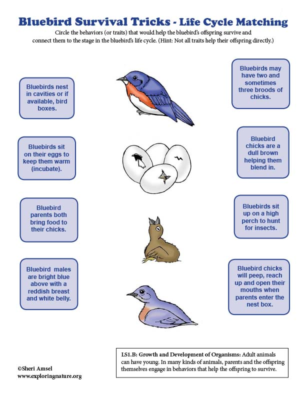 Bluebird Survival Tricks - Life Cycle Matching