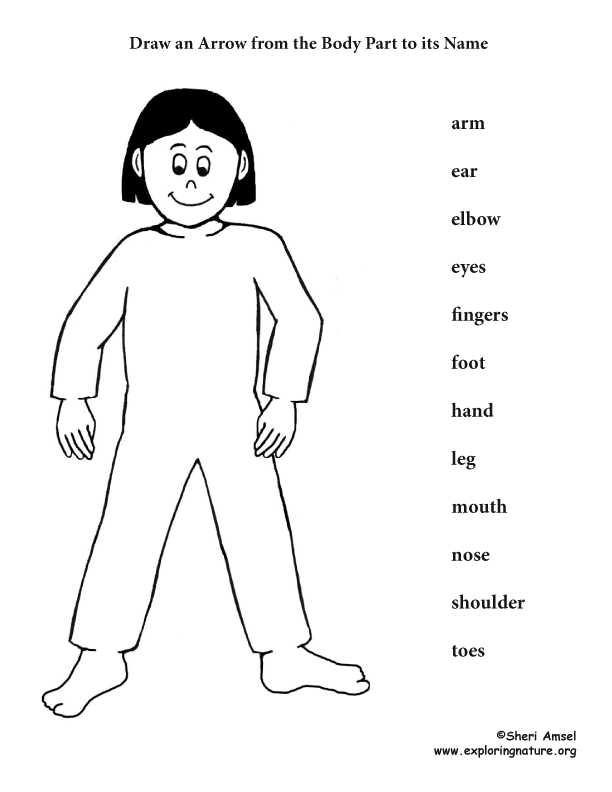 Body Parts Matching Activity (K-2)