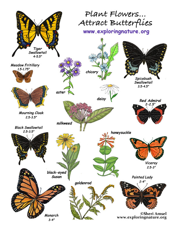 Plant a Butterfly Garden