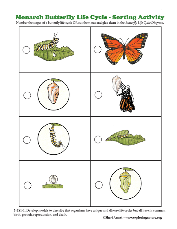 Monarch Butterfly Life Cycle - Sorting Activity