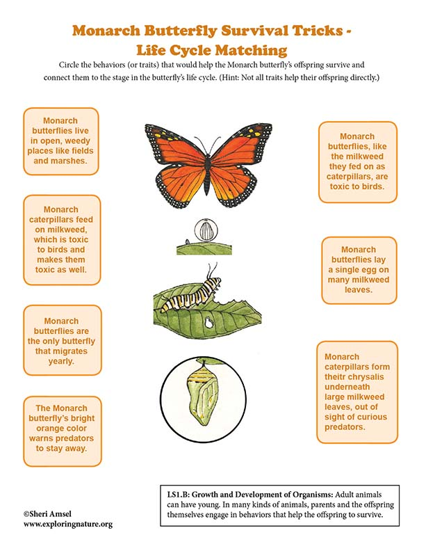 Monarch Butterfly Survival Tricks - Life Cycle Matching