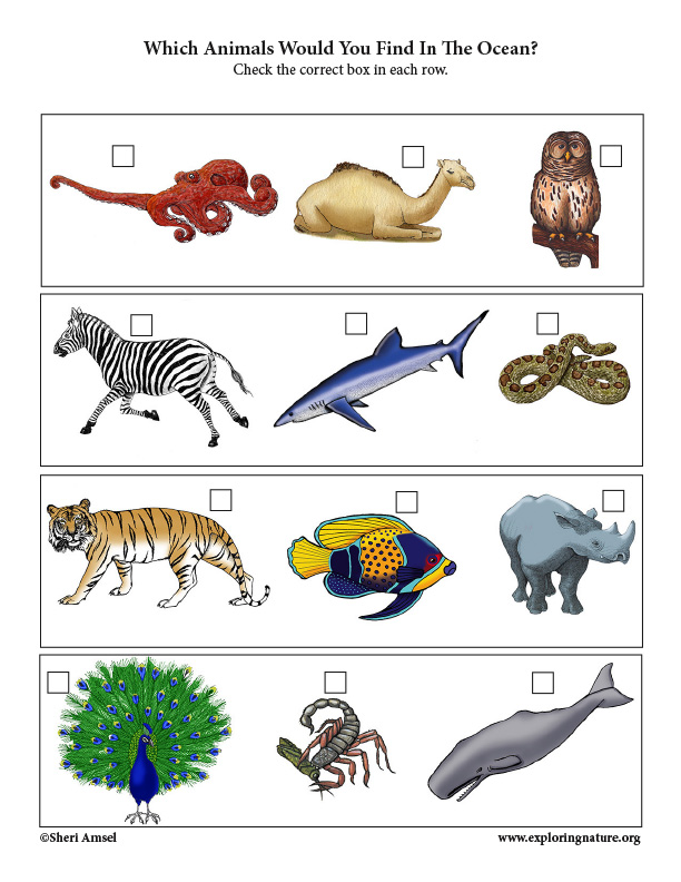 Which Animals Live in the Ocean? Critical Thinking Activity