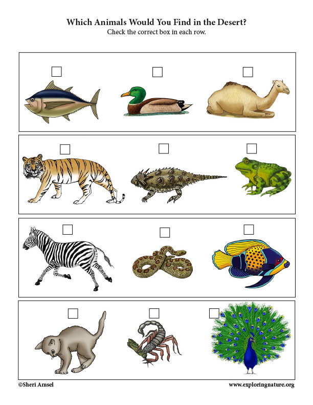 Which Animals Live in the Desert? Critical Thinking Activity