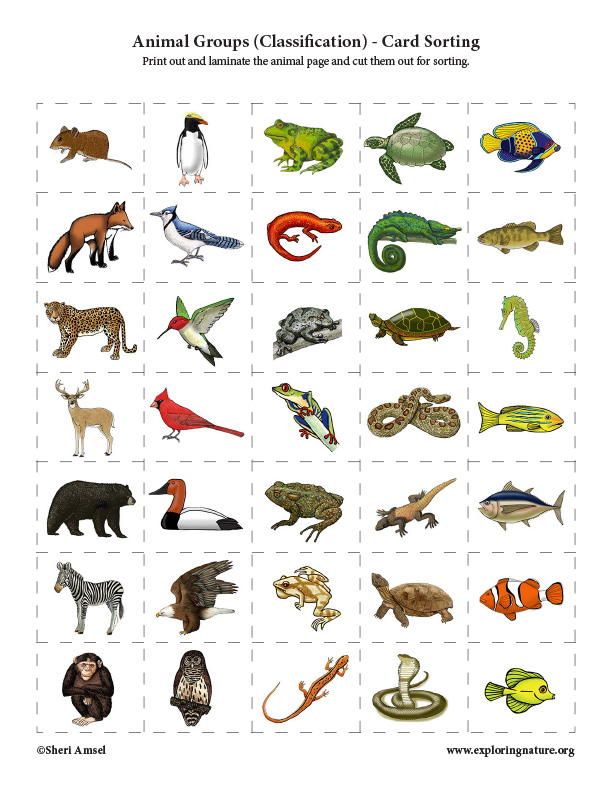 Animal Groups (Classification) - Card Sorting Activity