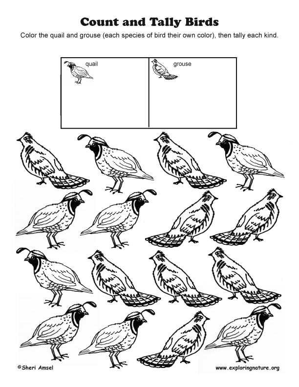 Count and Tally Birds