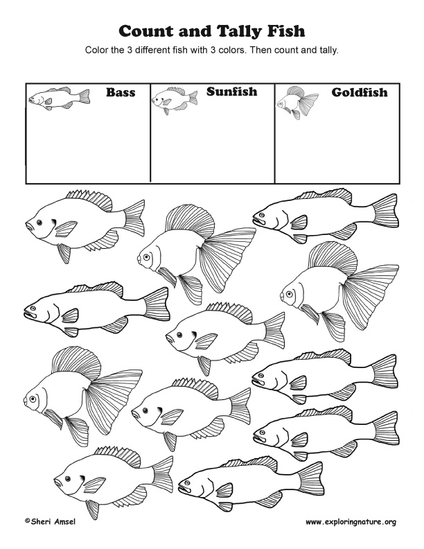 Count and Tally Fish