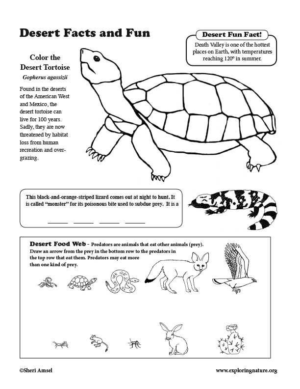 Desert Activity Sheet
