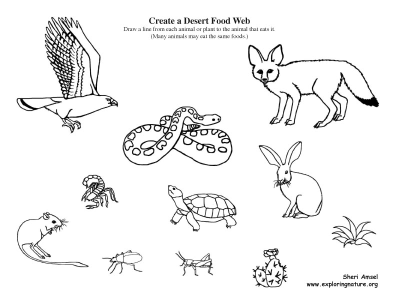 Create a desert food web